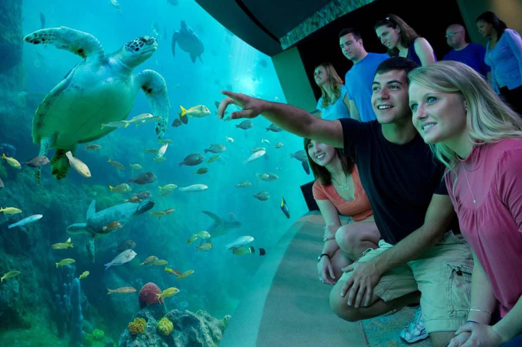 Aquário com tartarugas e peixes e pessoas observando os animais no Turtle Trek