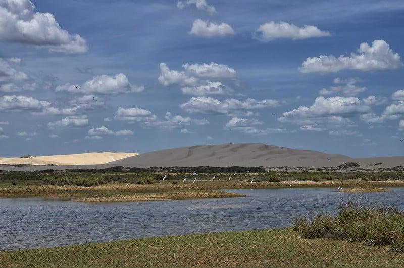 Paisagem da Rota das Emoções, entre Barreirinha e Paulino Neves, com vegetação rasteira, água, garças, e dunas ao fundo
