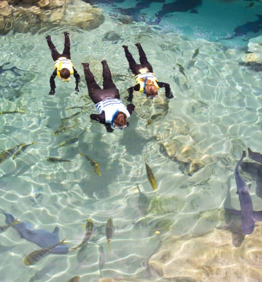 Pessoas mergulhando com tubarões em lago do Discovery Cove, parque em Orlando, na Flórida.