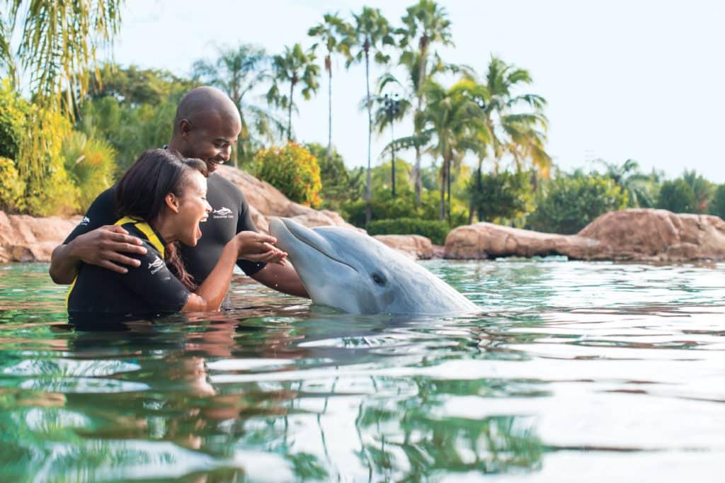 Casal com golfinho na experiência Dolphin Swim, no Discovery Cove