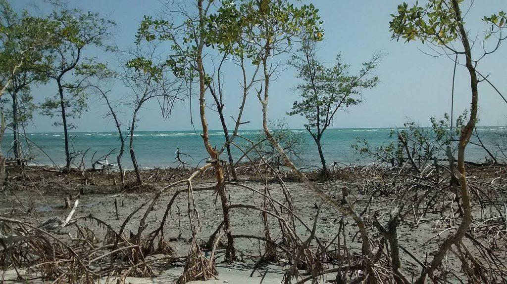 Paisagem única em Mangue Seco - Jericoacoara, com diversas raízes finas saindo do chão e mar ao fundo