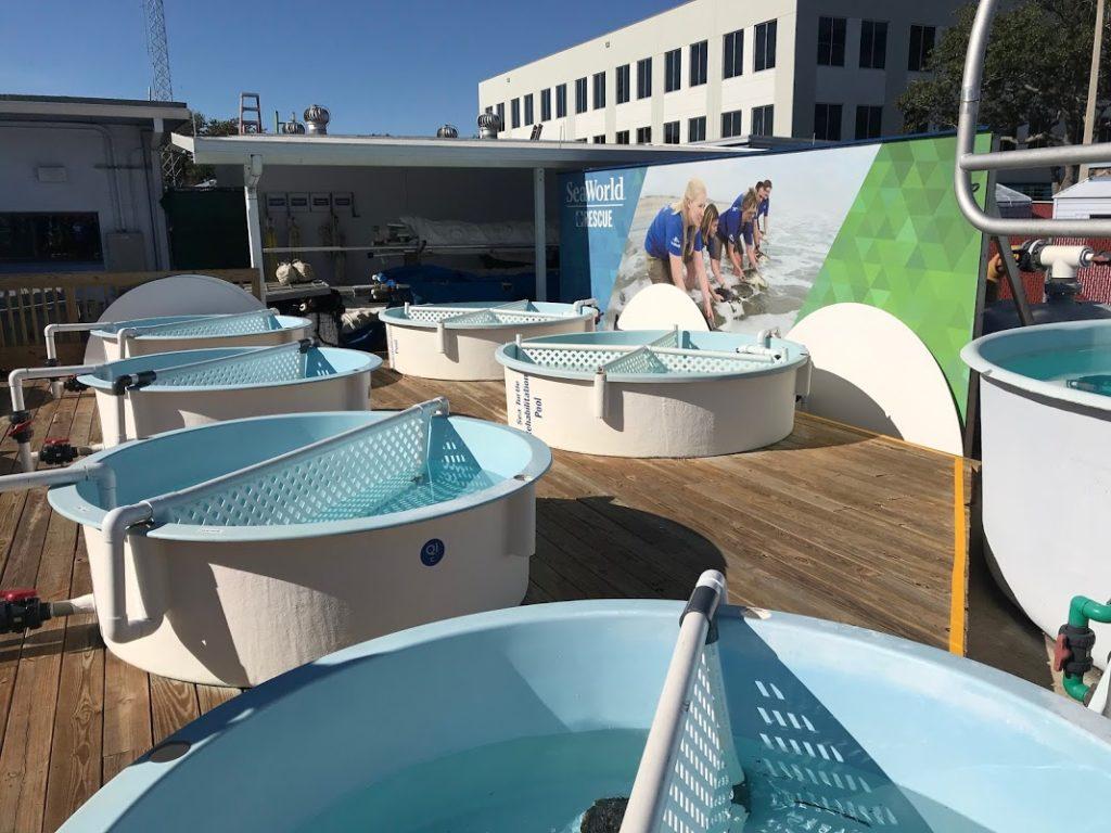 Os tanques no SeaWorld onde ficam as tartarugas resgatadas em situação de risco ou doentes - Foto: Flávio Antunes