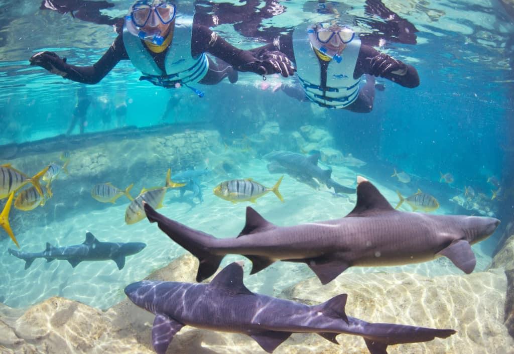 Duas pessoas fazendo snorkel em lago do Discovery Cove em Orlando, com tubarões e peixes nadando abaixo