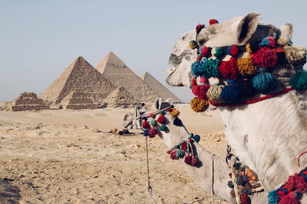 camelos olhando para as pirâmides do egito