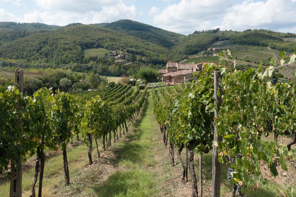 Foto de vinhedo nas colinas de Chianti, região de larga produção de vinhos na Itália e ótima para conhecer durante a lua de mel na Itália