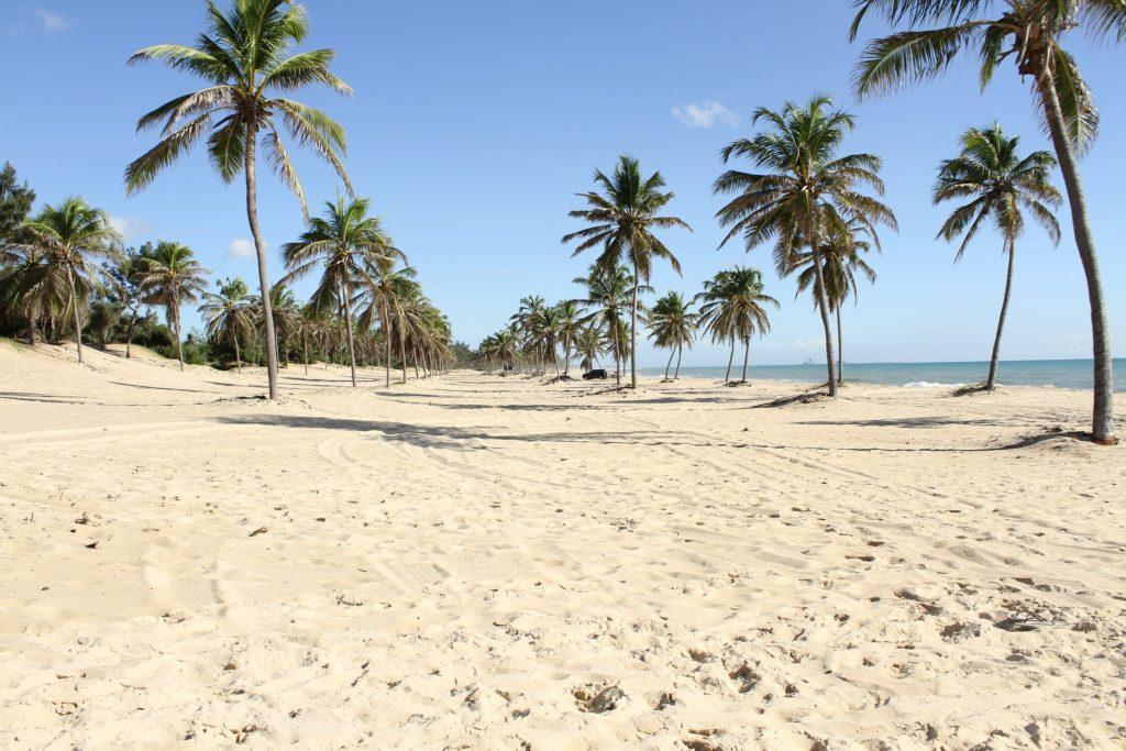 Palmeiras em extensa faixa de areia de praia do Ceará