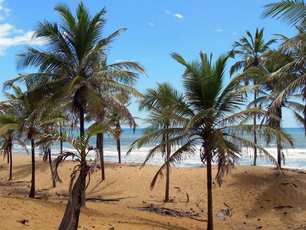 Pau Brasil em praia paradisíaca da Costa do Sauípe