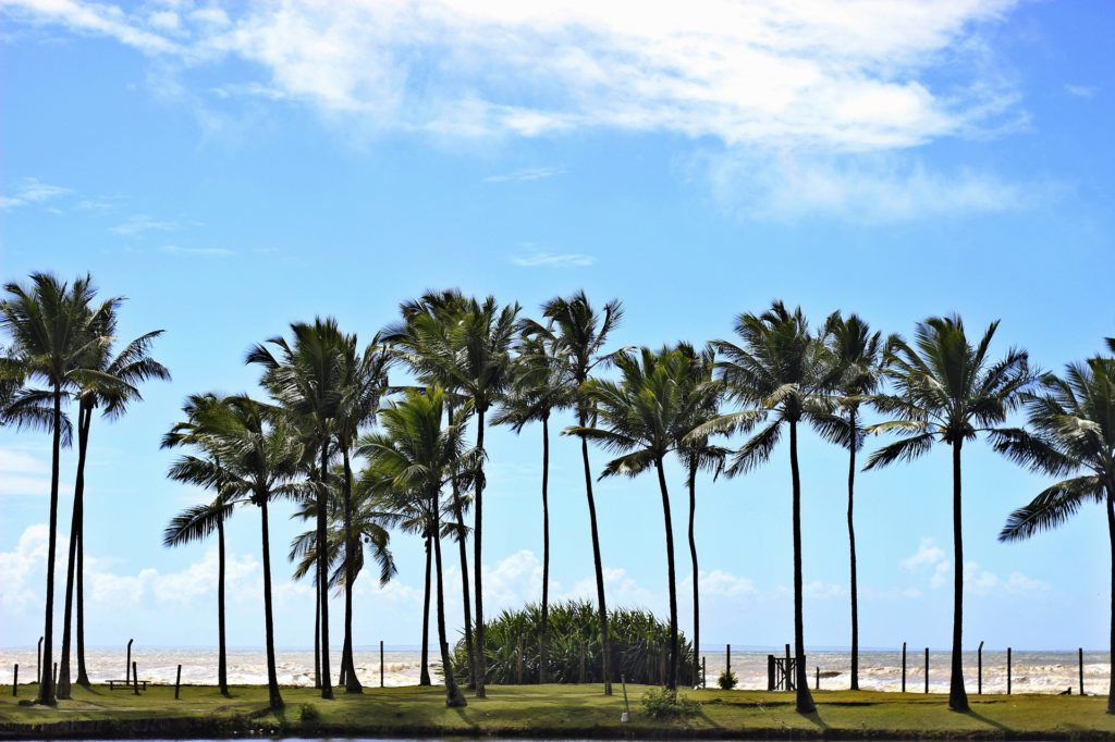 Foto de coqueiros em praia de Ilhéus