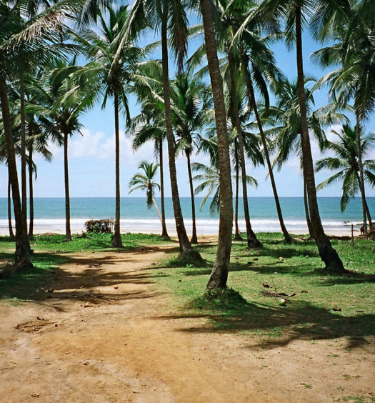 Coqueiros em praia de Itacaré, na Bahia