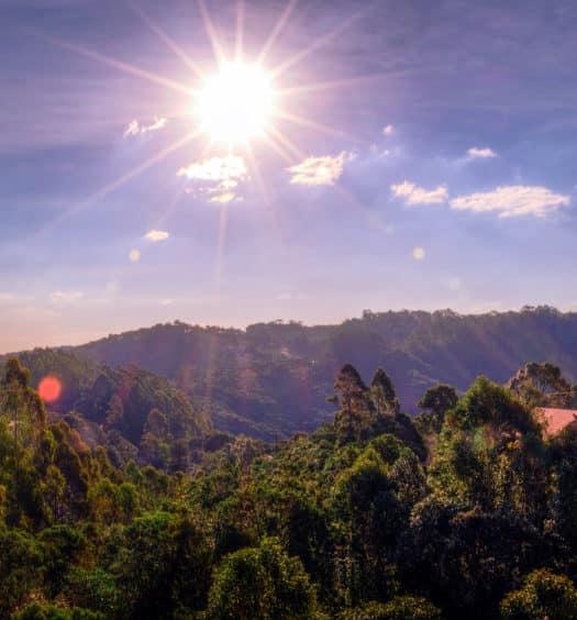 Mata e árvores em Monte Verde