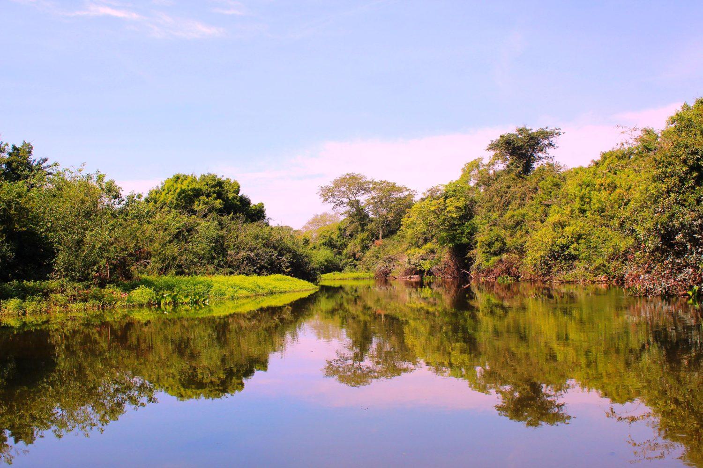 Pantanal, no Mato Grosso do Sul