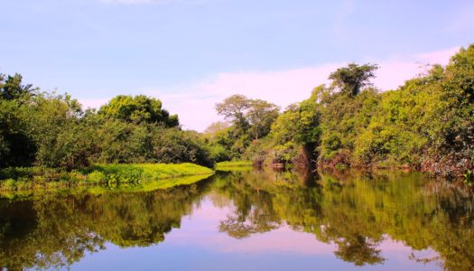 Mato Grosso do Sul – Guia Completo do Estado