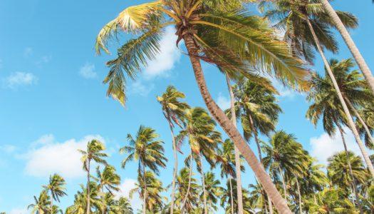 Pernambuco – Guia Completo do Estado