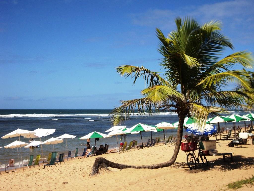 Praia do Forte com guarda-sóis e coqueiro
