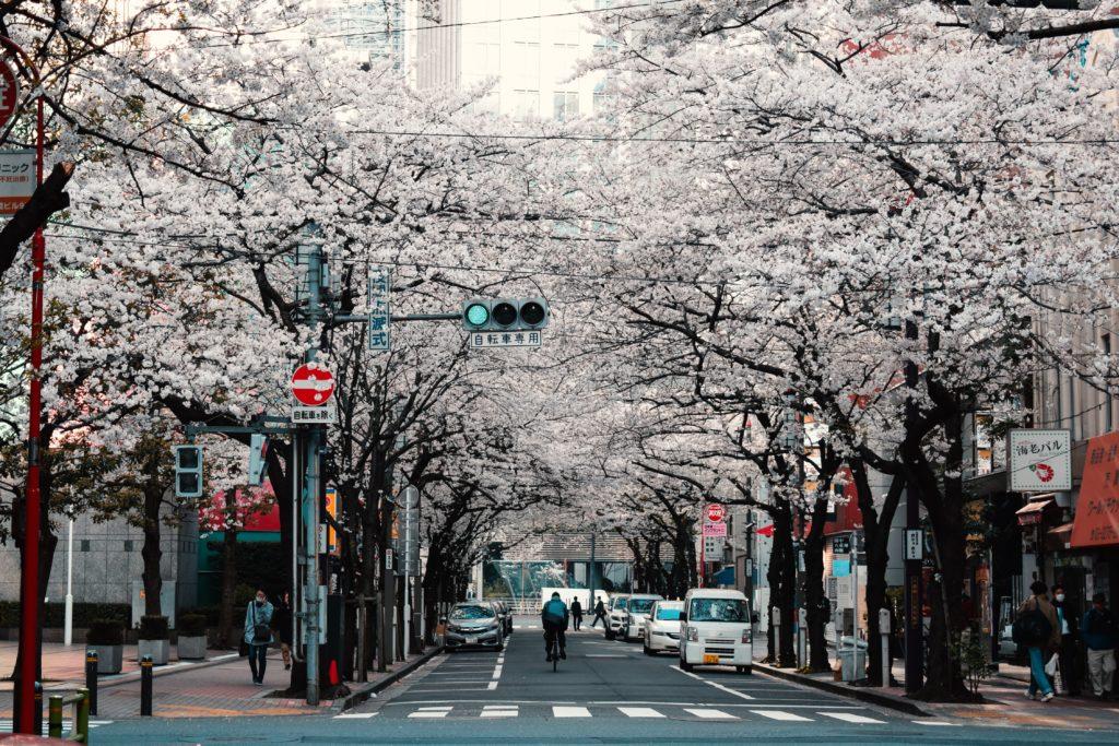 Rua com árvores floridas em Tóquio, no Japão