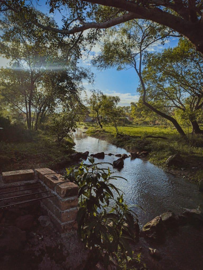 Pantanal na Riviera Nayarit