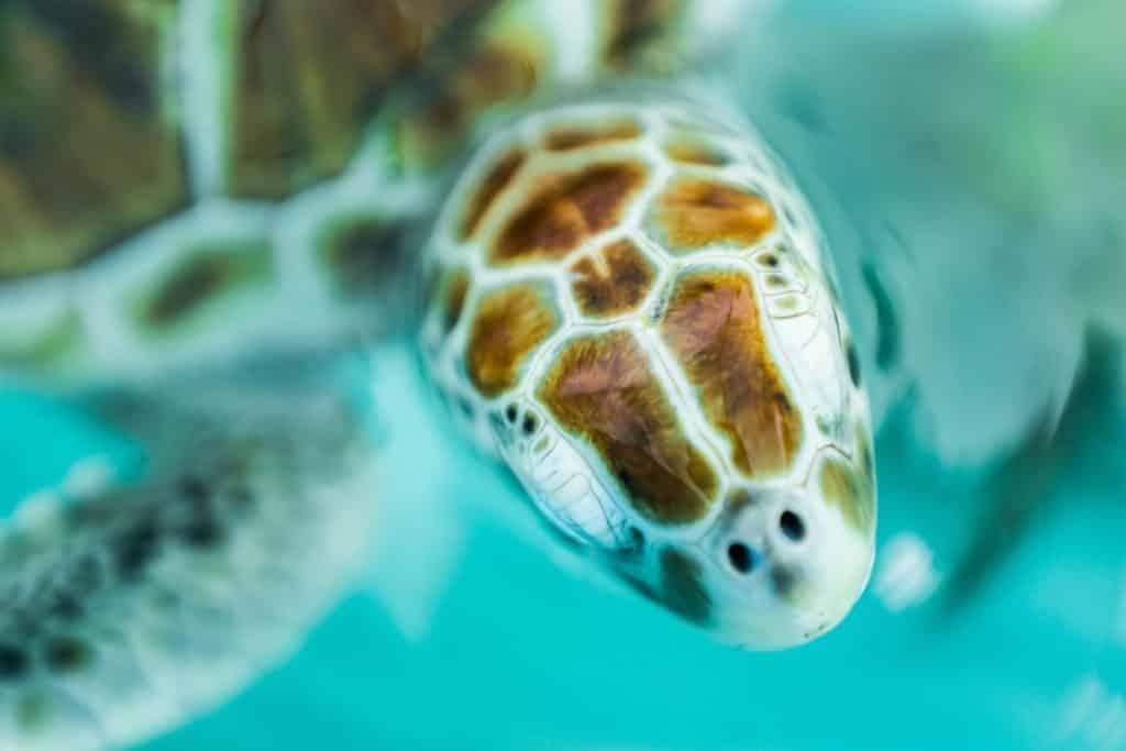 tartarugas na isla mujeres