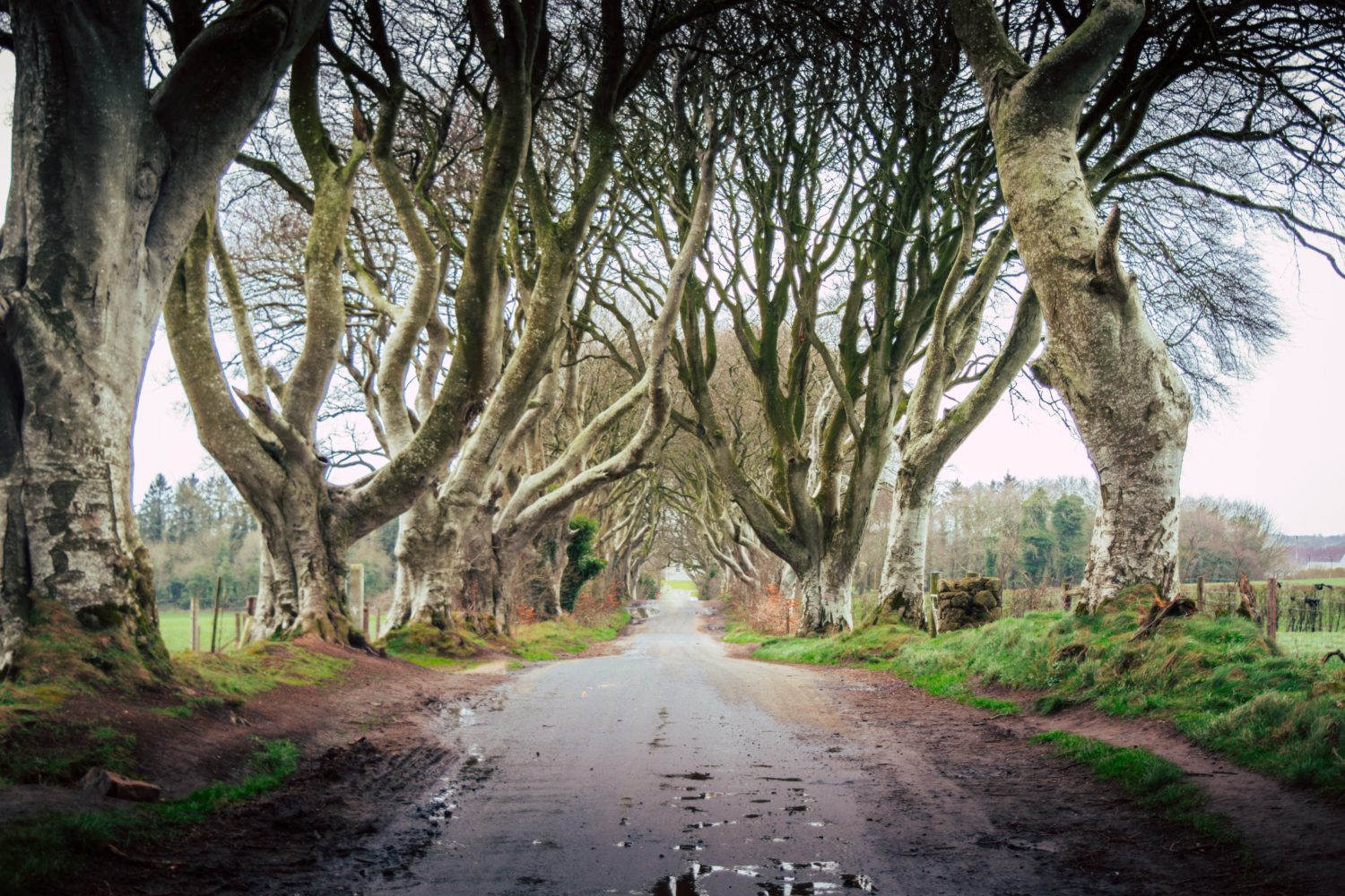 Dark Hedges em Ballymoney na Irlanda do Norte