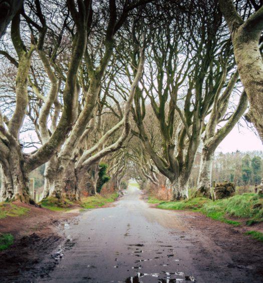 Dark Hedges em Ballymoney na Irlanda do Norte