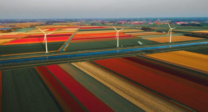 campos de tulipas em callantsoog na Holanda