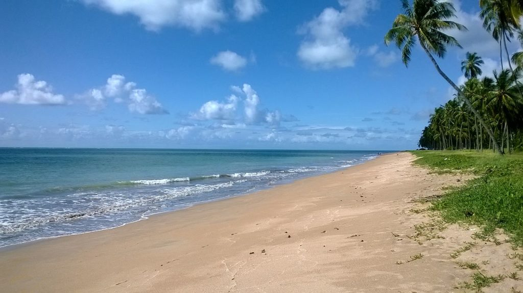 Praia vazia, com ondas baixas e coqueiros em volta
