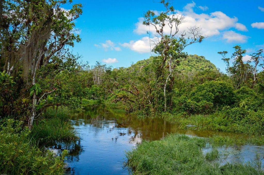 Foto de parte do Parque Estadual Restinga de Bertioga, área de preservação ambiental