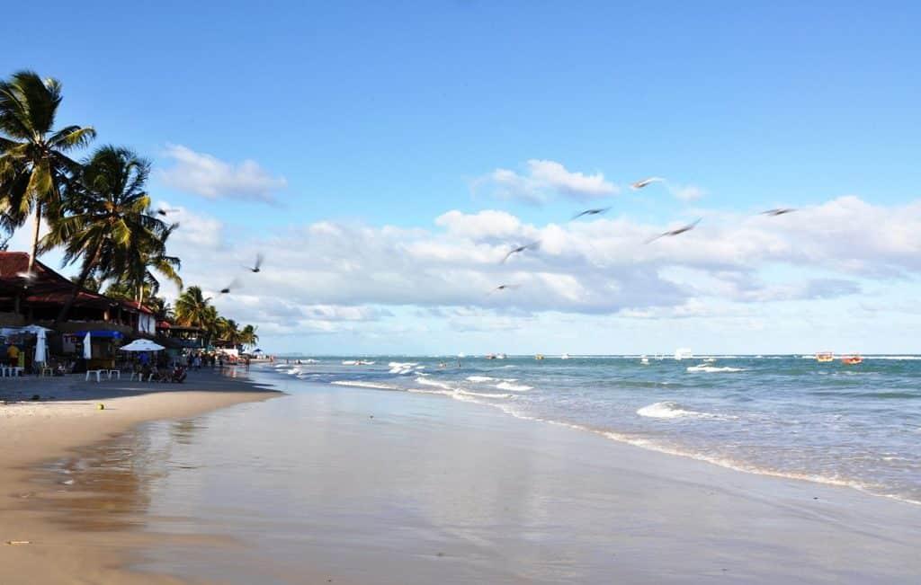 Orla da praia vazia, com ondas curtas e pássaros voando