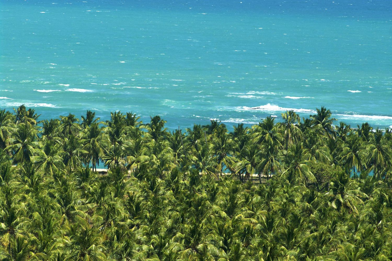 Coqueiral em frente ao mar turquesa da Praia do Gunga