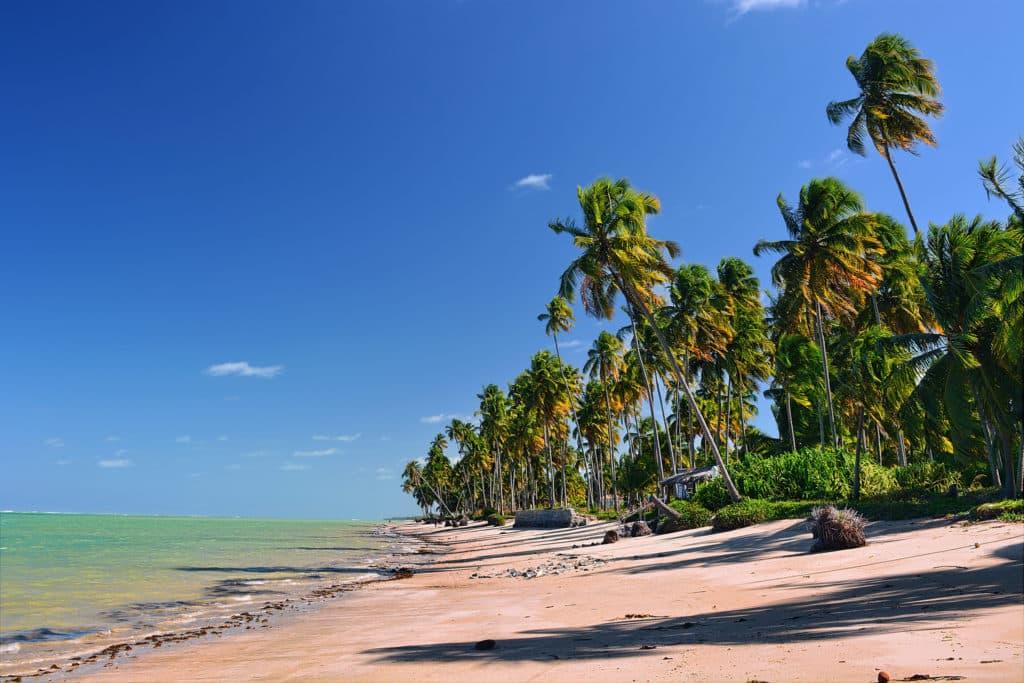 Orla da Praia do Patacho vazia, com coqueiros emoldurando a paisagem