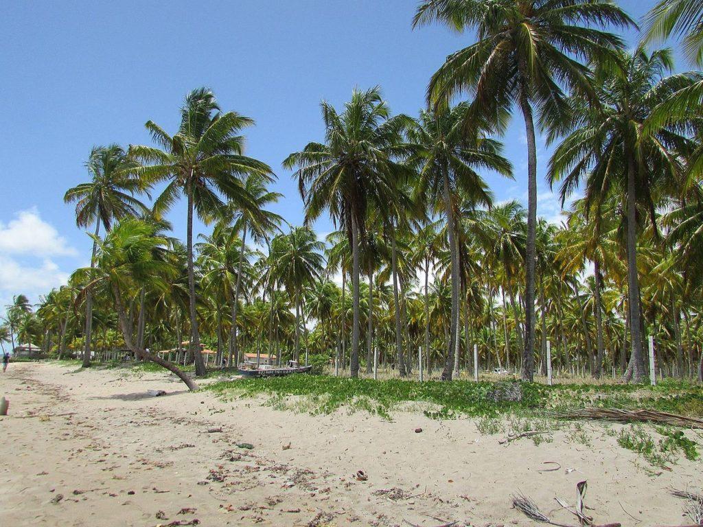 Orla da praia do Patacho, com cerca e coqueiros