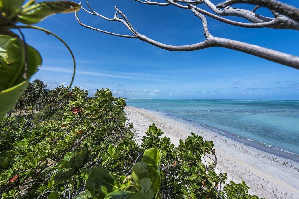 Vegetação e areia vazias, perto da água cristalina do mar
