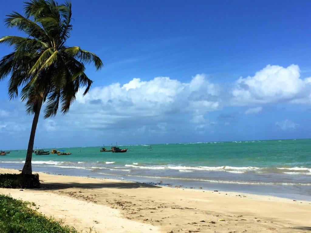 Mar esverdeado em praia tranquila, de ondas curtas, com coqueiro na areia