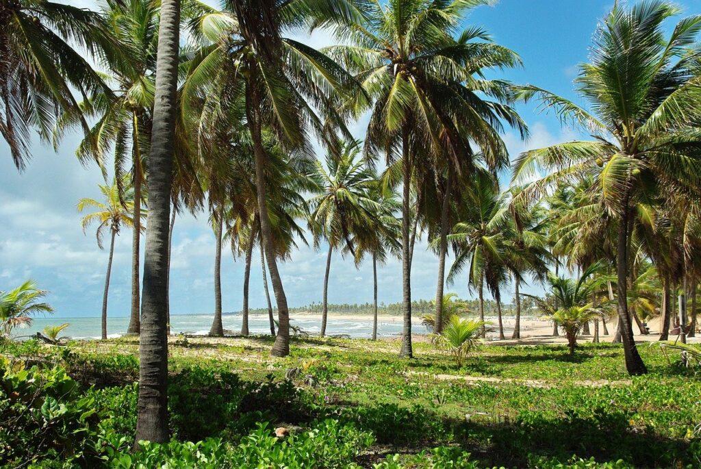 Vegetação nativa na orla da Costa do Sauípe