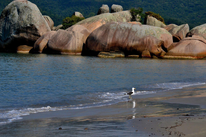 Gaivota na beira do mar em Governador Celso Ramos, ilustrando post de pousadas no destino