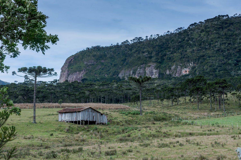 Vista de araucárias e chalé em meio à Serra Catarinense