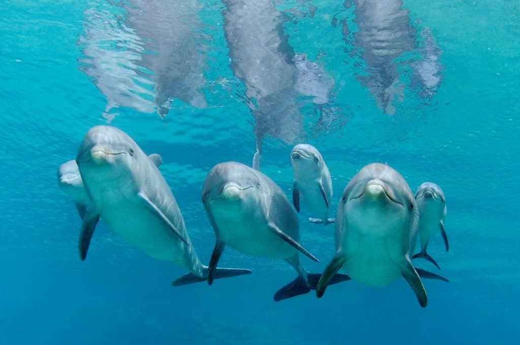 Golfinhos no Dolphin Academy, em Willemstad
