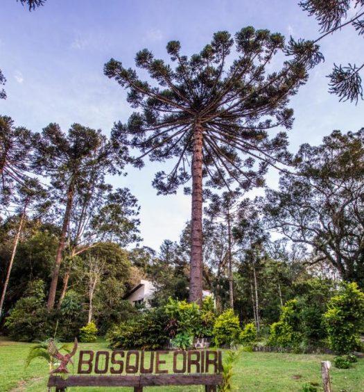 Araucárias do Boque Oriri, uma das pousadas no interior do Paraná