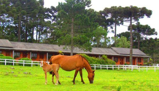 Hotéis fazenda em Santa Catarina – Os 10 melhores do estado