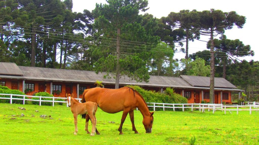 Cavalos em pasto de um dos hotéis fazenda em Santa Catarina