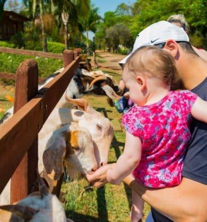 Criança alimentando cabras em um dos hotéis fazenda em São Paulo